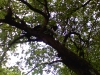 Katze aufm Baum