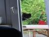 Katze schaut rein