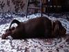 Der lange Hund